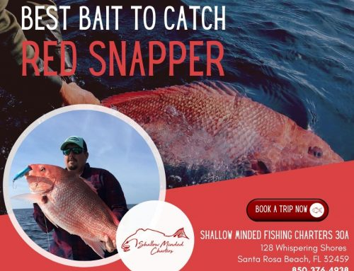 Best Bait To Catch Red Snapper
